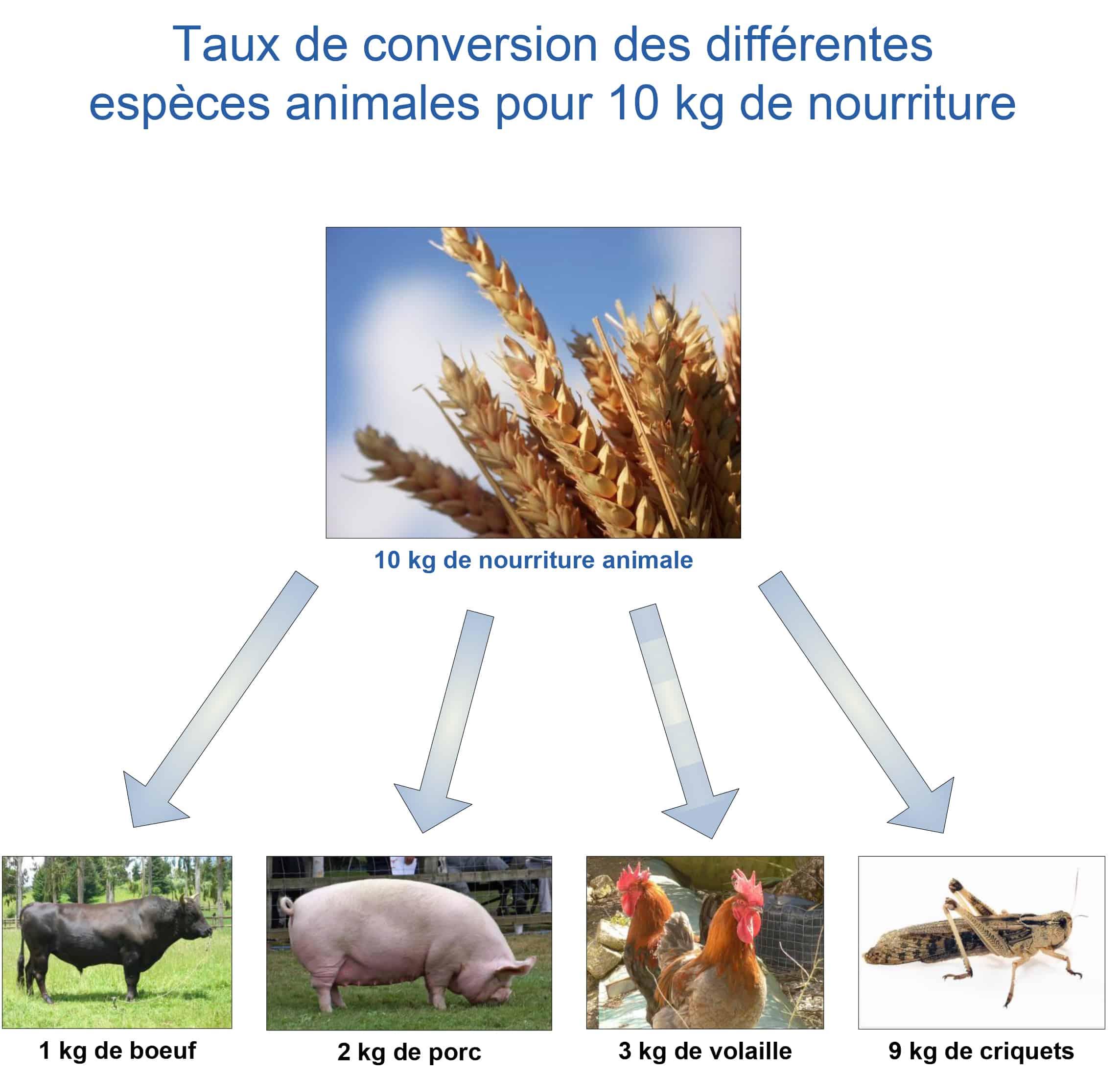 Taux de conversion des différentes espèces animales pour 10 kg de nourriture