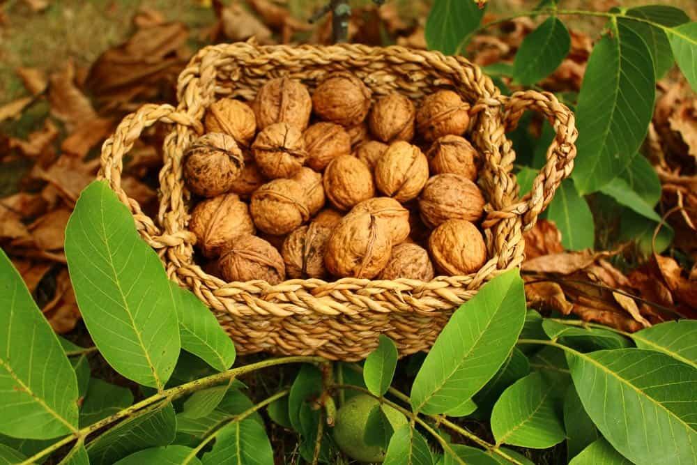 Conservation des noix - Nutri Green Planet