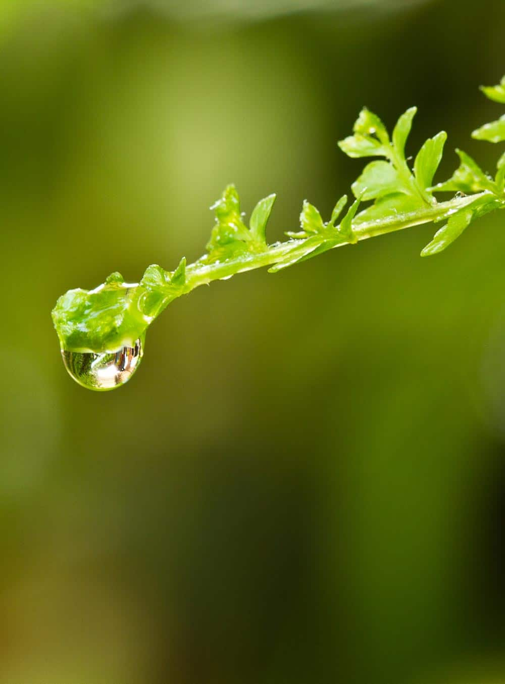 Cycle de l'azote - Nutri Green Planet
