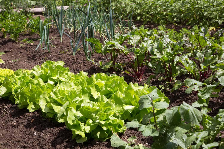 Stratégie d'association des plantes - Nutri Green Planet.jpg