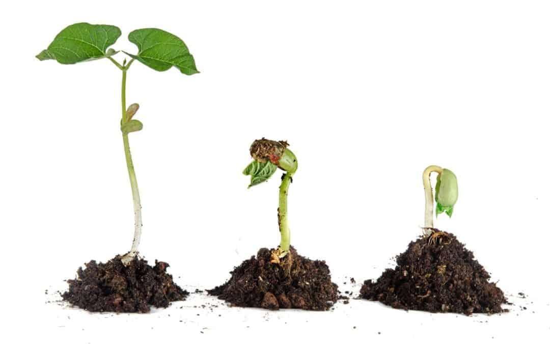 Comment faire ses propres semis ?