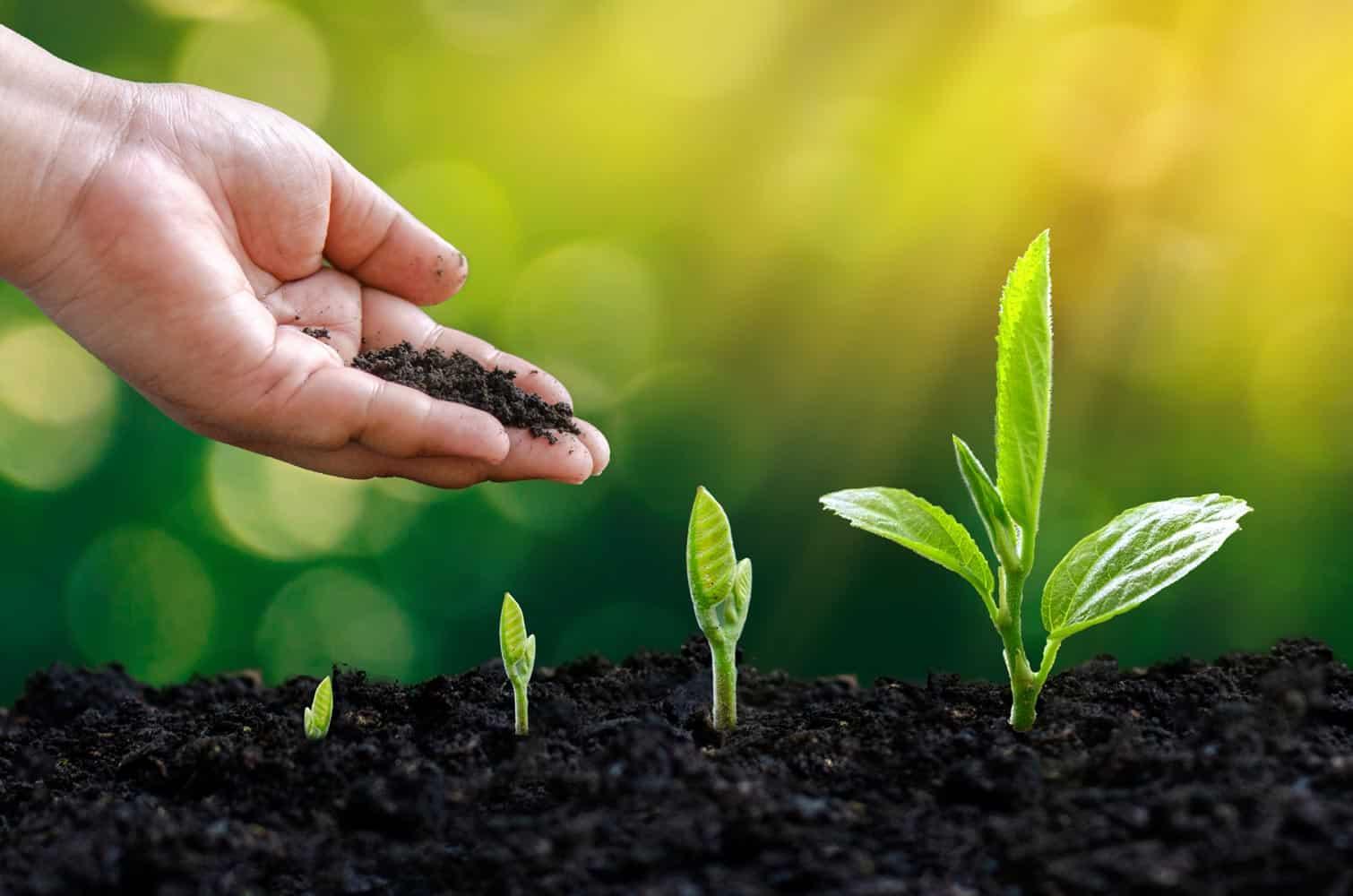 Faire ses propres semis (Nutri Green Planet)