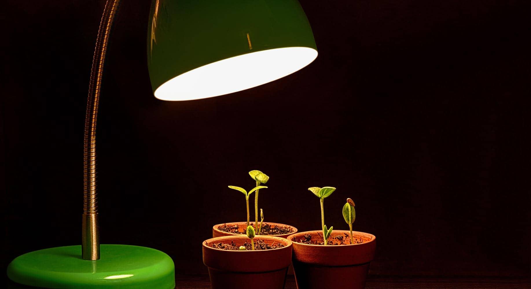 Lumière de croissance pour plantes (Nutri Green Planet)