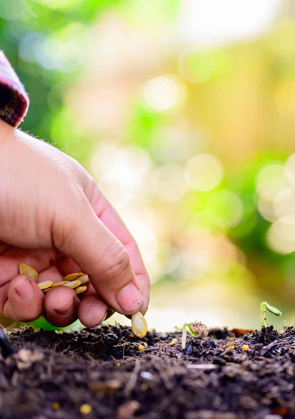 Semer des courgettes (Nutri Green Planet)